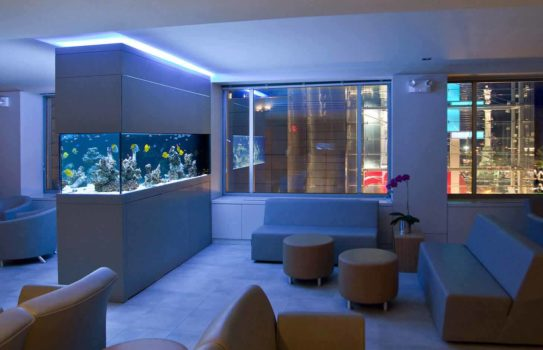 IMG aquarium 511 543x350 - Аквариум в интерьере квартиры или дома