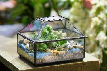 Флорариум или цветы в террариуме для вашего дома