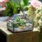 IMG 6150 60x60 - Флорариум или цветы в террариуме для вашего дома