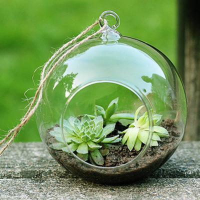 Флорариум или цветы в террариуме для вашего дома - фото 2