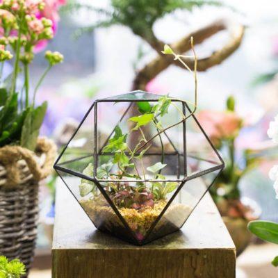 Флорариум или цветы в террариуме для вашего дома - фото 3