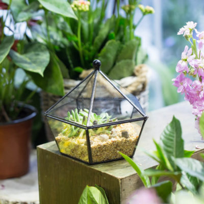 Флорариум или цветы в террариуме для вашего дома - фото 4
