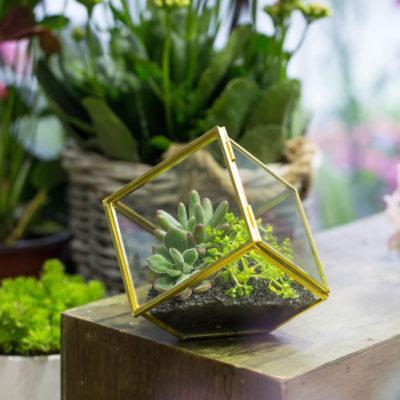 Флорариум или цветы в террариуме для вашего дома - фото 5