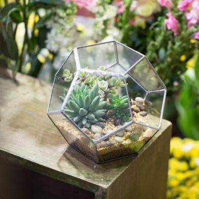 Флорариум или цветы в террариуме для вашего дома - фото 6