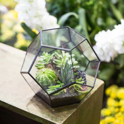 Флорариум или цветы в террариуме для вашего дома - фото 7