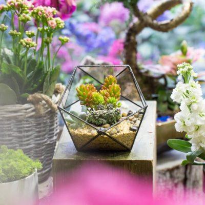 Флорариум или цветы в террариуме для вашего дома - фото 8