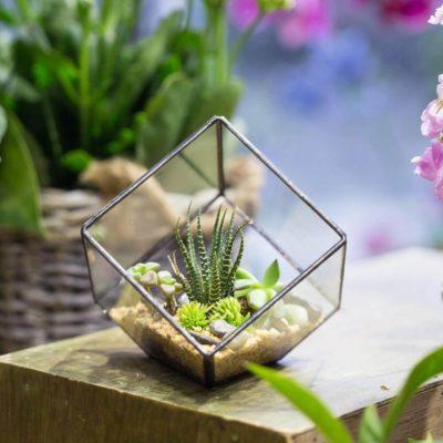 Флорариум или цветы в террариуме для вашего дома - фото 11