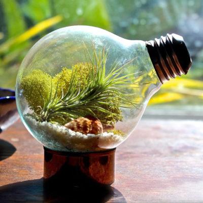 Флорариум или цветы в террариуме для вашего дома - фото 12