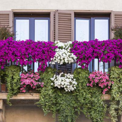 Цветы на балконе: идеи и секреты красочных галерей - фото 2
