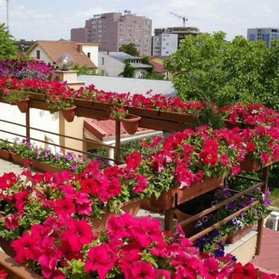 Красный цветник на балкончике