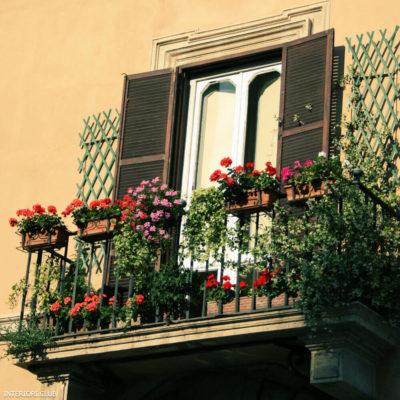 Аккуратно посаженные цветы на балконе