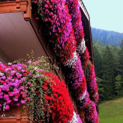 Яркие балконные цветы