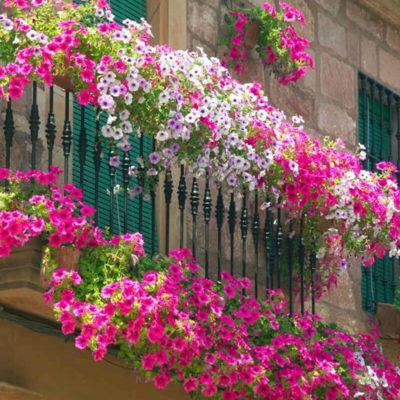 Фото балкона в цветах