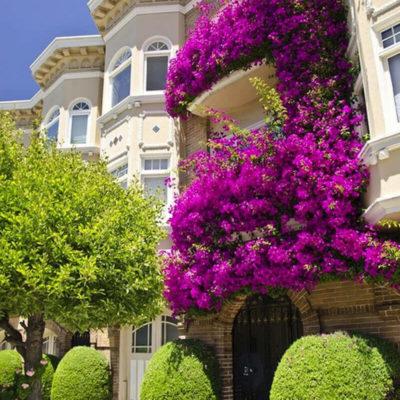Балкон в сиреневых цветах