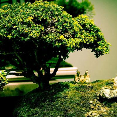 Бонсай в интерьере: селим и ухаживаем за японским чудом - фото 11