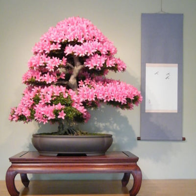 Бонсай в интерьере: селим и ухаживаем за японским чудом - фото 23