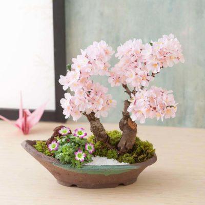 Бонсай в интерьере: селим и ухаживаем за японским чудом - фото 36