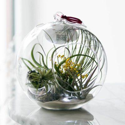 Флорариум или цветы в террариуме для вашего дома - фото 15