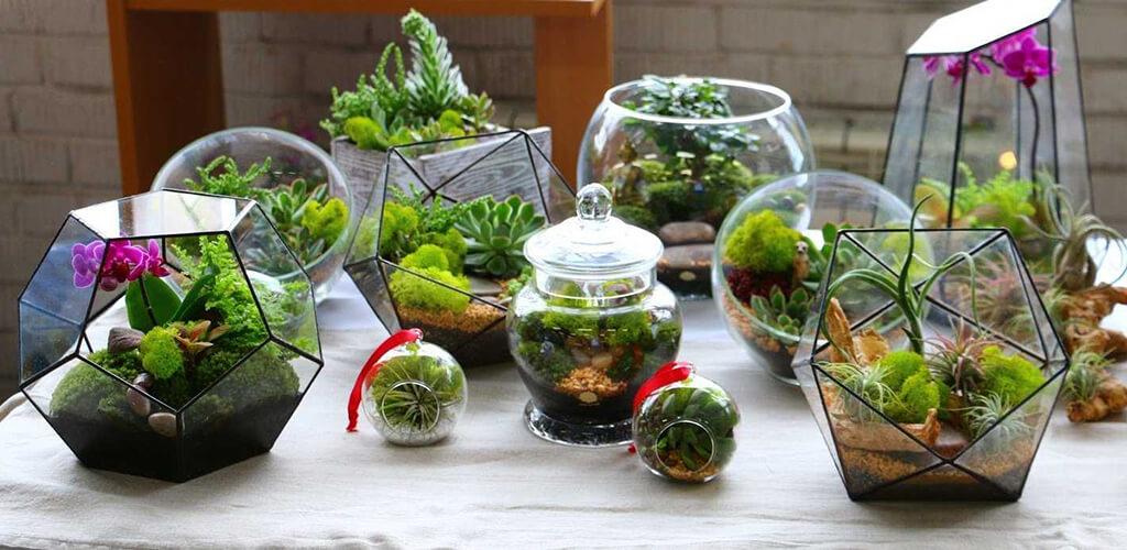 oformlenie florariuma - Флорариум или цветы в террариуме для вашего дома